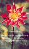 Mohr, Johannes: Geschichte der kleinen Blume